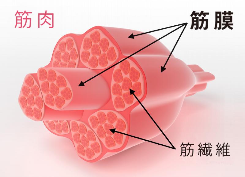 CROTHO 筋膜リリース②